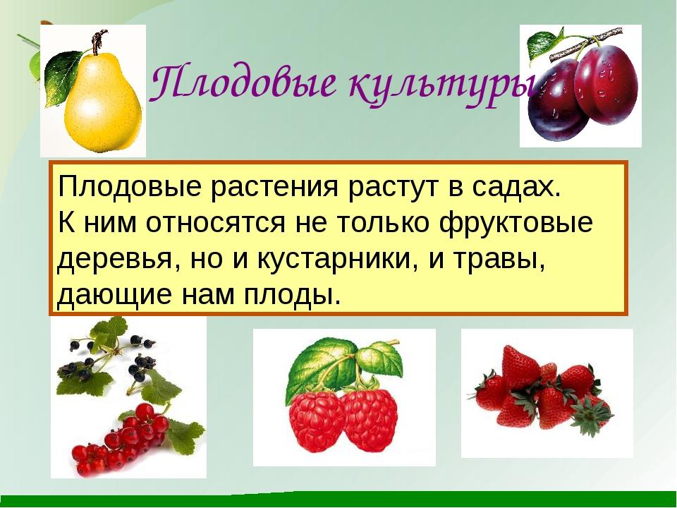 Плодовые культуры Плодовые растения растут в садах. К ним относятся не тольк...