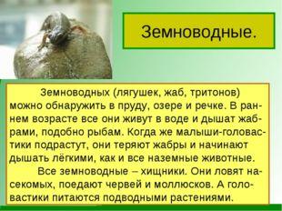 Земноводные. Земноводных (лягушек, жаб, тритонов) можно обнаружить в пруду, о