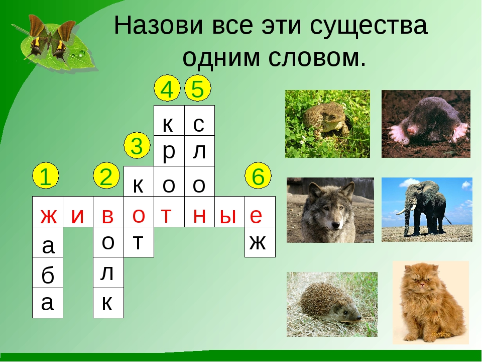 Назови все эти существа одним словом. 1 2 3 4 5 6