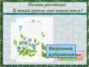Назови растение. К какой группе оно относится? Сосна Калина Орешник Клён Одув