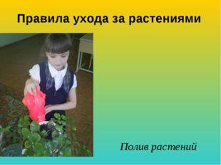 Полив растений Правила ухода за растениями