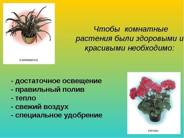 Чтобы комнатные растения были здоровыми и красивыми необходимо: - достаточно...