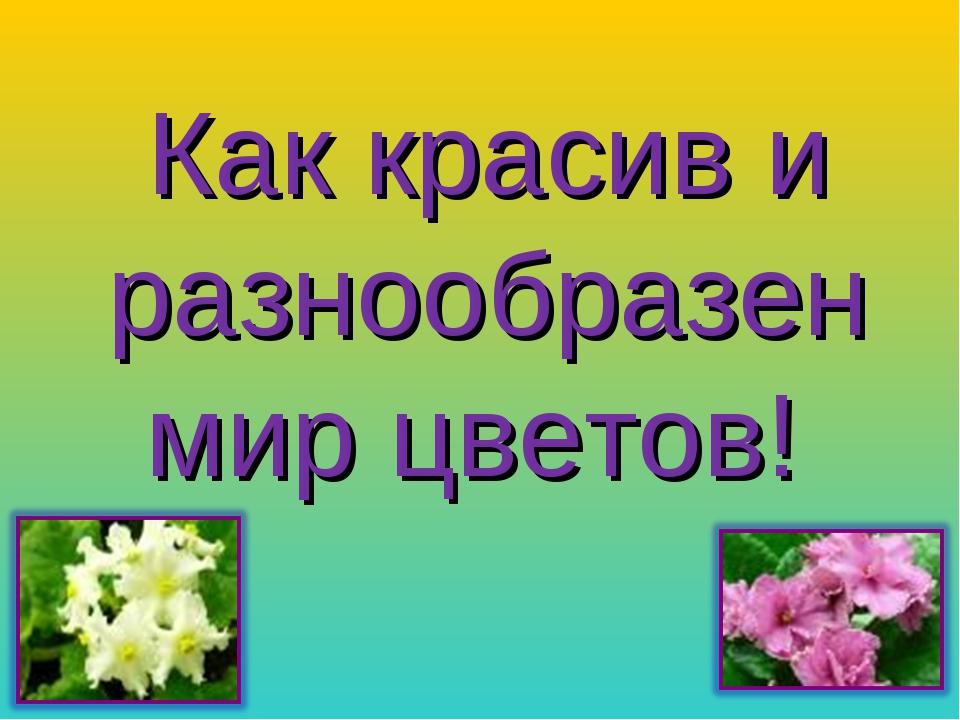 Как красив и разнообразен мир цветов!