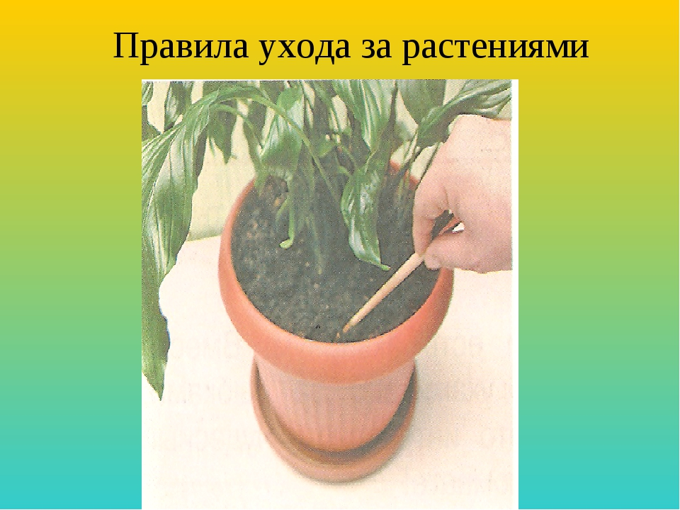 Правила ухода за растениями