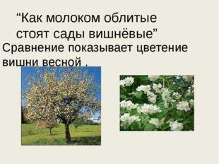 """""""Как молоком облитые стоят сады вишнёвые"""" Сравнение показывает цветение вишни"""