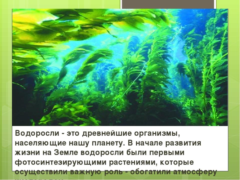 направлений значения водорослей картинка можно