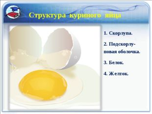 Структура куриного яйца 1. Скорлупа. 2. Подскорлу-повая оболочка. 3. Белок. 4