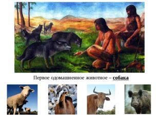 Первое одомашненное животное – собака