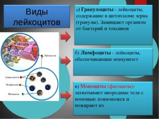 Тромбоциты Кровяные тельца без ядра Свертывание крови 300-400 тыс. 1 см 3 Стр