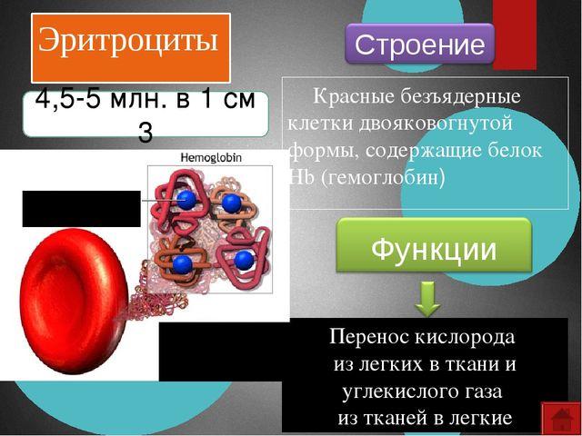 Лейкоциты Белые амебообразные клетки с ядром Иммунитет 6-8 тыс. в 1 см 3 Стро...