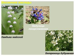 Весенние месяцы Ветреница дубравная Ландыш майский Медуница лекарственная