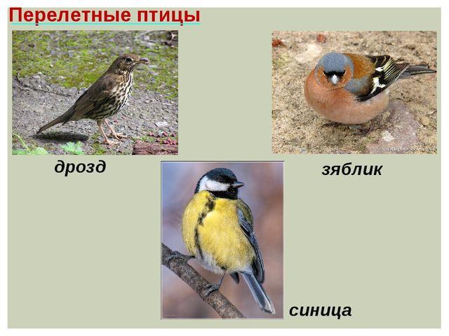 Перелетные птицы синица дрозд зяблик