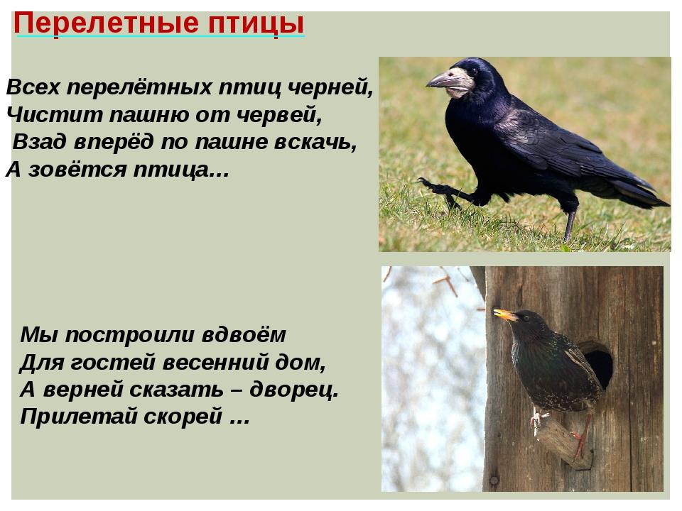 Перелетные птицы Всех перелётных птиц черней, Чистит пашню от червей, Взад вп...
