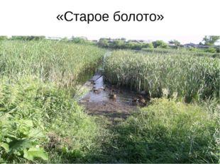 «Старое болото»