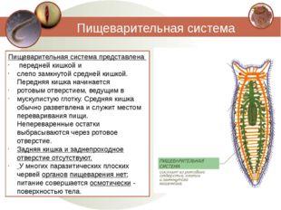 Пищеварительная система Пищеварительная система представлена передней кишкой