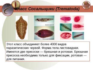 Этот класс объединяет более 4000 видов паразитических червей. Форма тела лист
