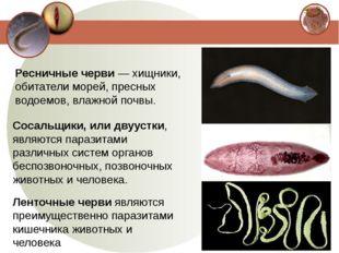 Ресничные черви — хищники, обитатели морей, пресных водоемов, влажной почвы.