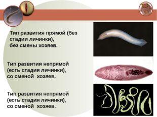 Тип развития прямой (без стадии личинки), без смены хозяев. Тип развития непр