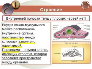 Строение Внутренней полости тела у плоских червей нет! Внутри кожно-мускульно