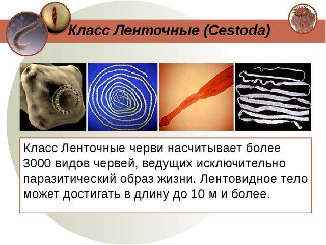 Класс Ленточные черви насчитывает более 3000 видов червей, ведущих исключител...