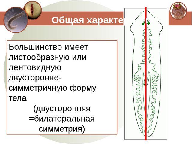 Большинство имеет листообразную или лентовидную двусторонне-симметричную форм...