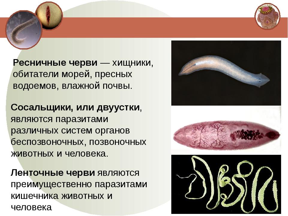 Ресничные черви — хищники, обитатели морей, пресных водоемов, влажной почвы....