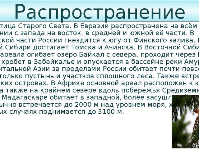 Распространение Удод — птица Старого Света. В Евразии распространена на всём...