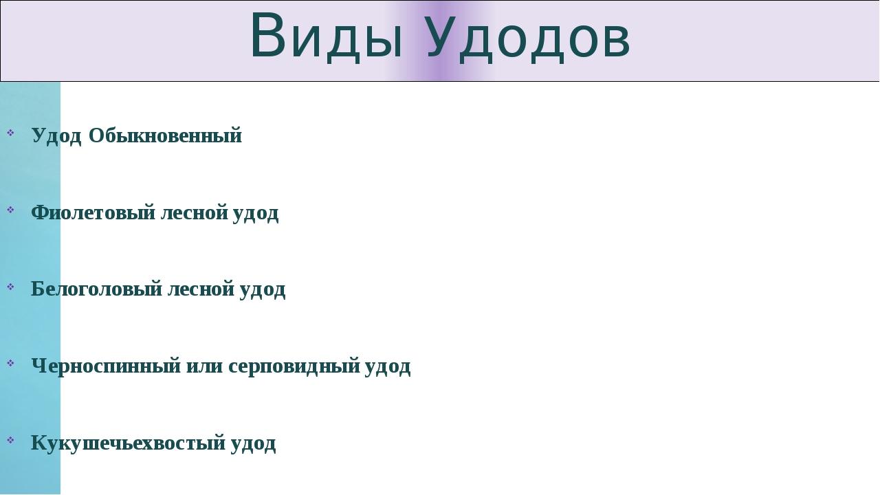 Виды Удодов Удод Обыкновенный Фиолетовый лесной удод Белоголовый лесной удод...