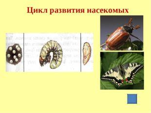 Цикл развития насекомых