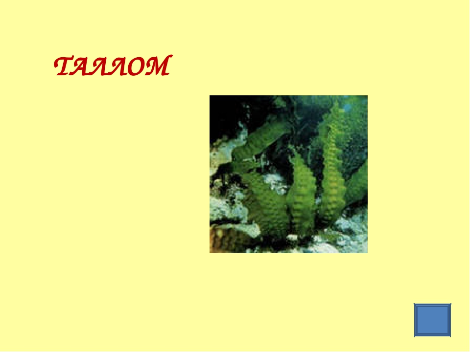 ТАЛЛОМ