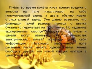 Пчёлы во время полёта из-за трения воздуха о волоски на теле накапливают на с