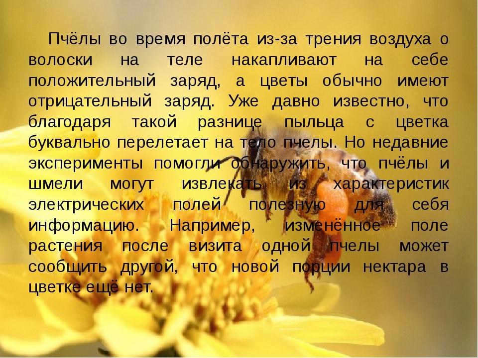 Пчёлы во время полёта из-за трения воздуха о волоски на теле накапливают на с...