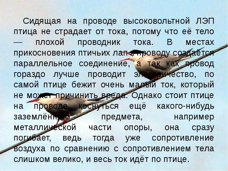 Сидящая на проводе высоковольтной ЛЭП птица не страдает от тока, потому что е...