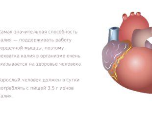 Самая значительная способность калия — поддерживать работу сердечной мышцы, п