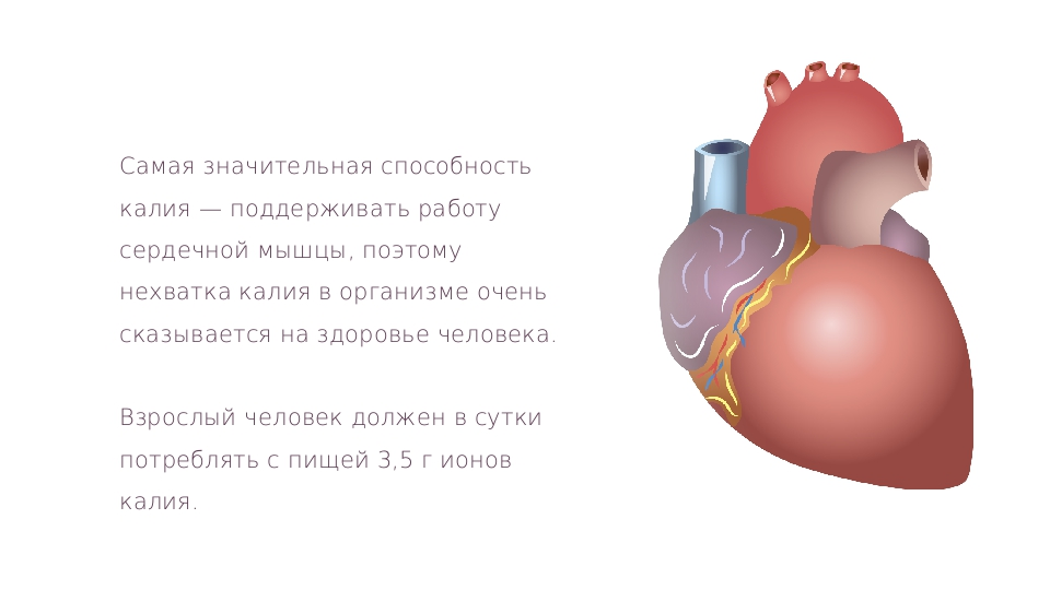 Самая значительная способность калия — поддерживать работу сердечной мышцы, п...