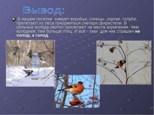 В нашем посёлке зимуют воробьи, синицы, сороки, голуби, прилетают из леса по