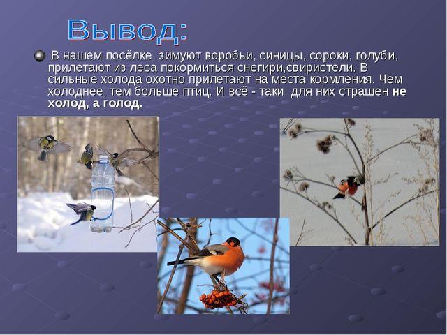 В нашем посёлке зимуют воробьи, синицы, сороки, голуби, прилетают из леса по...