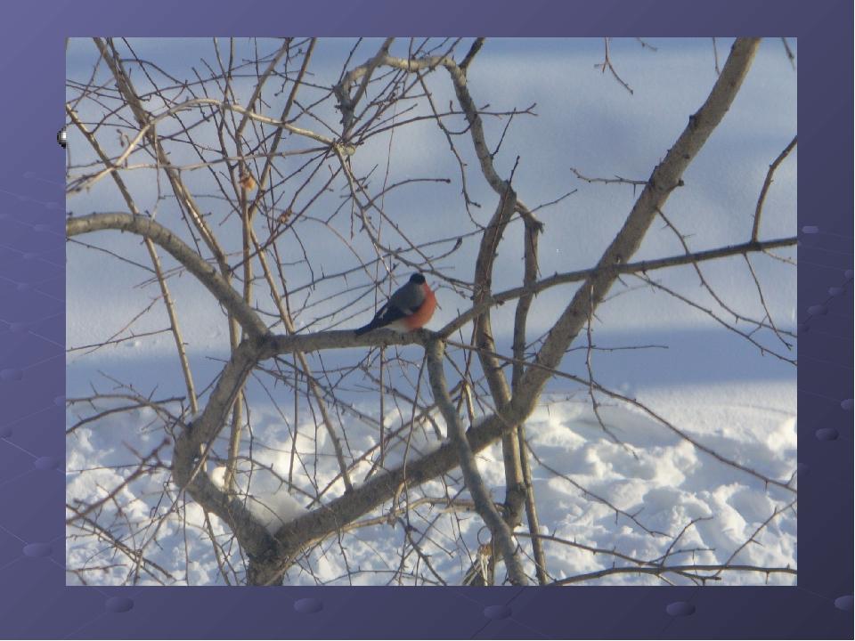 зимующие птицы - постоянные гости кормушек