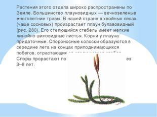 Растения этого отдела широко распространены по Земле. Большинство плауновидн