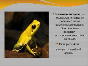 Ужасный листолаз — маленькая лягушка из рода листолазов семейства древолазов.