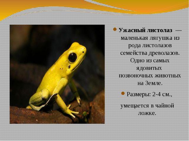 Ужасный листолаз — маленькая лягушка из рода листолазов семейства древолазов....