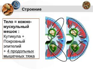 Строение Тело = кожно-мускульный мешок : Кутикула + Покровный эпителий + 4 пр