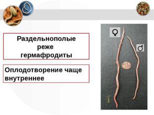 Оплодотворение чаще внутреннее Раздельнополые реже гермафродиты