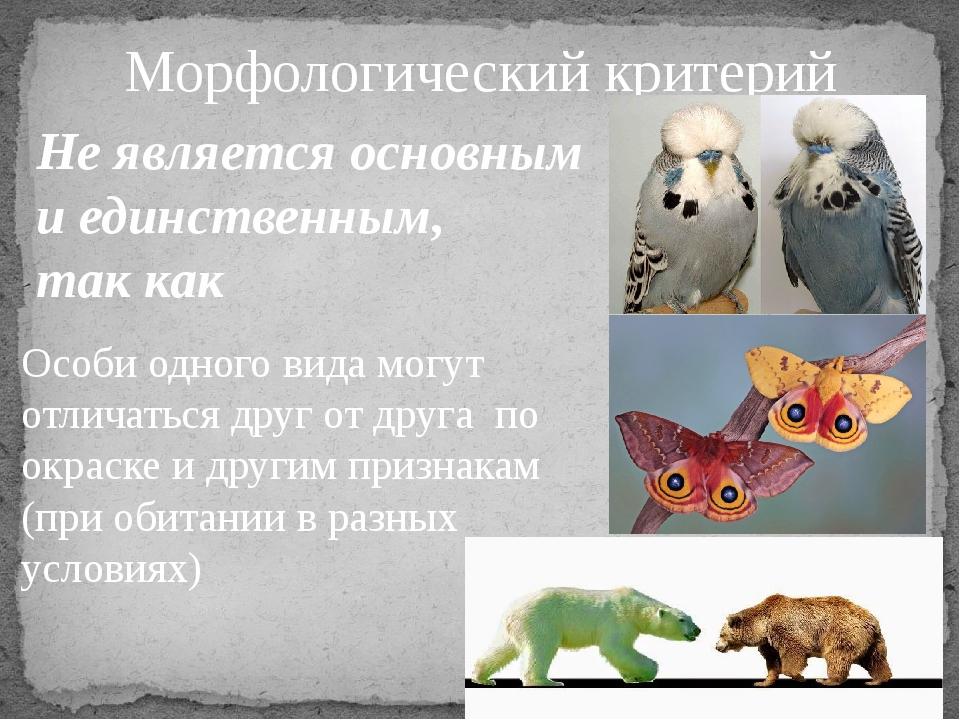 Морфологический критерий Не является основным и единственным, так как Особи о...