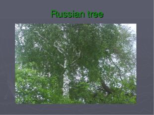 Russian tree