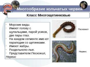 Многообразие кольчатых червей Морские виды. Имеют голову с щупальцами, парой