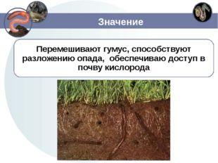 Значение Перемешивают гумус, способствуют разложению опада, обеспечиваю досту