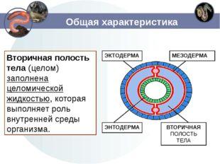 Общая характеристика Вторичная полость тела(целом) заполнена целомической жи