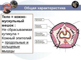 Общая характеристика Тело = кожно-мускульный мешок : Не сбрасываемая кутикула