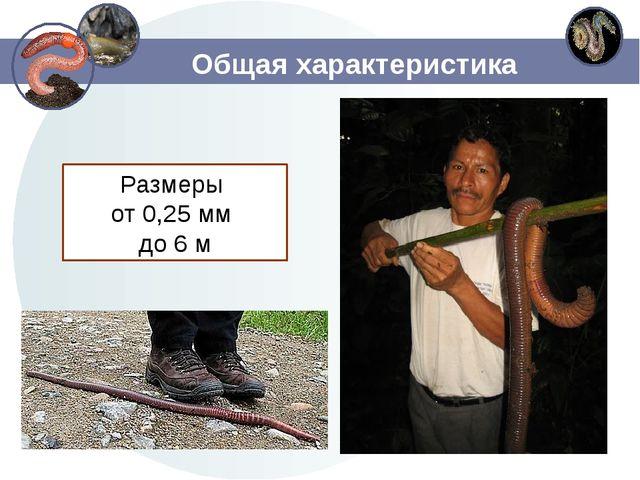 Общая характеристика Размеры от 0,25 мм до 6 м